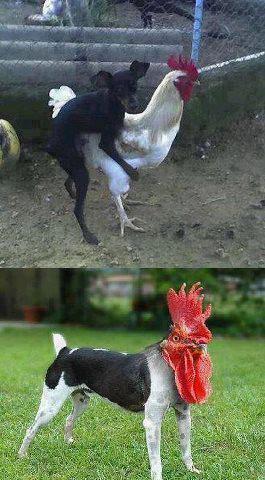 Egy pajkos kutya története