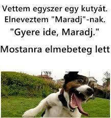 Értelmes kutyanév